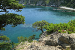 Pine trees on sea shore Royalty Free Stock Photos