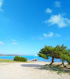 Pine trees by the sea in Stintino Royalty Free Stock Photography