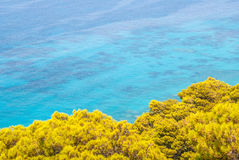 Pine trees by the sea. Pine tree tops juxtaposed with turquoise blue waters Stock Images