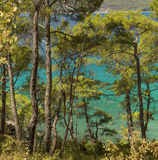 Pine trees and the sea. In Turkey Stock Photo