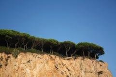 Pine trees. On a seashore Royalty Free Stock Photos