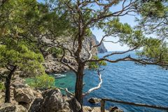 Pine trees on the shore of the blue sea. Stock Image