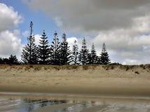 Pine Trees Shoreline Royalty Free Stock Image