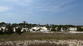 Pine trees and shrubs growing on a sand dune in Florida stock photos