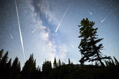 Pine trees silhouette Milky Way falling stars royalty free stock images