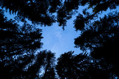 Pine trees silhouette Milky Way Royalty Free Stock Photography