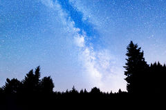Pine trees silhouette Milky Way Stock Photography