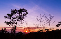 Pine trees in silhouette at sunset Royalty Free Stock Image