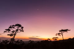 Pine trees in silhouette at sunset Royalty Free Stock Images