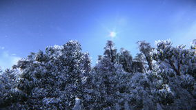 Pine trees in snow footage. Beautiful pine trees in snow in winter stock video