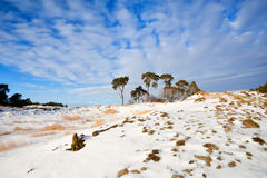 Pine trees on snow hill over blue sky Royalty Free Stock Images