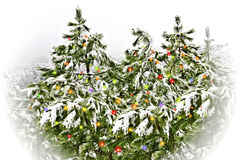 Pine trees with snowflakes Royalty Free Stock Images