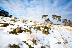 Pine trees on snowy hill Royalty Free Stock Photos