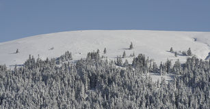 Pine trees on snowy mountain Stock Photography