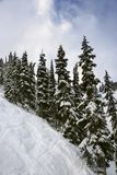 Pine trees on snowy mountain side. Royalty Free Stock Photography
