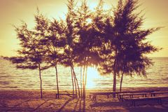 Pine trees standing on sand beach with sea and sunset in the background at Chao Lao Beach, Chanthaburi Province. Soft focus. Beautiful summer seasonal image of Royalty Free Stock Photography