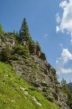 Pine trees in stone mountain peak Stock Photo