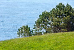 Pine trees on summer coast. Stock Photo
