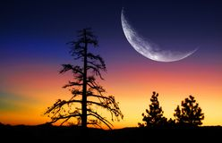 Pine Trees and Sunrise with Moon Royalty Free Stock Photos