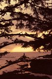 Pine trees and sunset. Sunset/sunrise over the ocean with silhouettes of pine tree branches in the foreground Royalty Free Stock Photo