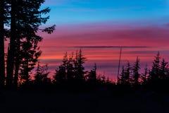 Pine trees at sunset Royalty Free Stock Image