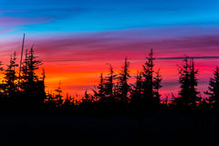 Pine trees at sunset Stock Images