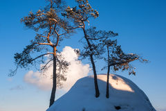 Pine trees on the top of the snowy rock. Against blue sky in Saxon Switzerland national park Stock Photo