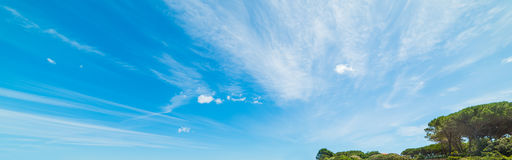 Pine trees under a blue sky Royalty Free Stock Photography