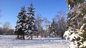 Pine-trees under snow stock video