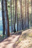 Pine trees and walk path in camping site on mountain with lake Royalty Free Stock Photo