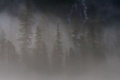 Pine Trees and Water Fall Peek Through Thick Fog Stock Photography