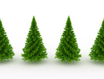 Pine trees on white Royalty Free Stock Photo