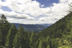 Pine Tress on the Mountain Landscape Photo during Daytime Stock Photos