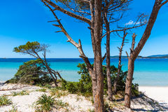 Pine trunks by the sea in Alghero. Sardinia, Italy Royalty Free Stock Image