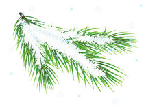 Pine Twig Royalty Free Stock Photos
