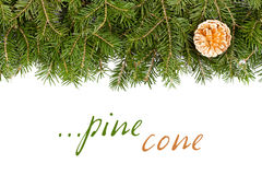 Pine twig with golden cone Royalty Free Stock Photo