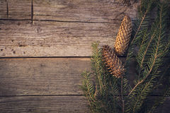 Pine twig with pine cones over wooden texture Stock Image