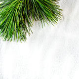Pine twig Stock Images