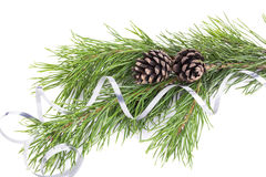 Pine twigs with cones  on white Stock Photography