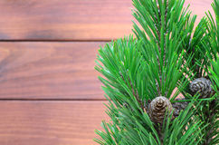 Pine twigs with cons Royalty Free Stock Photography