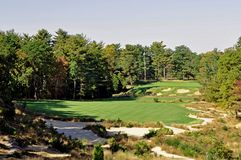 Pine Valley Finish Royalty Free Stock Images