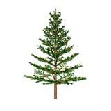 Pine,, Stock Image