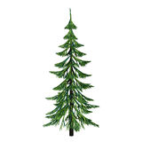 Pine,, Royalty Free Stock Images