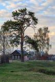 Pine on the village street. Evening landscape Royalty Free Stock Photos