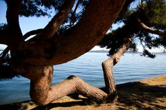 Pine W at Alki Beach Stock Photography