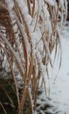 Pine-wood το χειμώνα Στοκ φωτογραφία με δικαίωμα ελεύθερης χρήσης