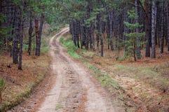 pine-wood Foto de Stock