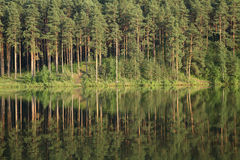 Free Pine Wood Stock Photography - 5823732