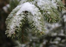 Pine-wood Στοκ φωτογραφία με δικαίωμα ελεύθερης χρήσης