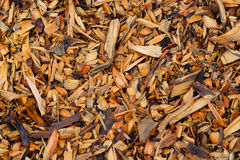 Pine wood chips. Pieces of wood. Texture. Pine wood chips on the ground. Pieces of wood. Texture royalty free stock photography